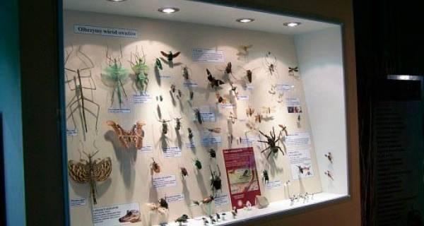 Gablota z okazami wszelkich owadów w muzeum motyli we Władysławowie
