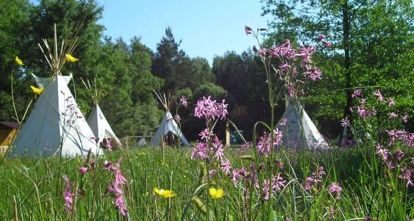 Kawałek polany z trawą, żółtymi i filetowymi kwiatkami , w tle widać wioskę z białych tipi